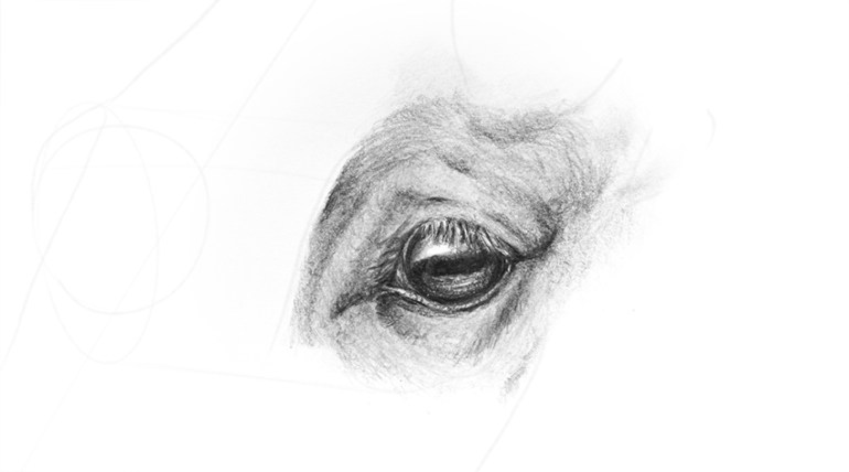 horse eye one more level of details