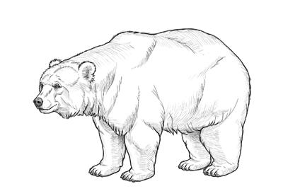 如何画一只熊