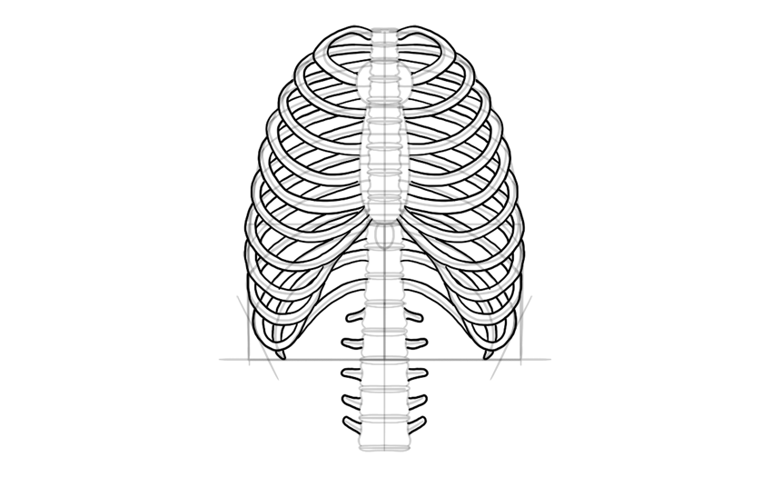 diagram of skeletal ribs ibanez rg560 wiring how to draw a skeleton step by outline the
