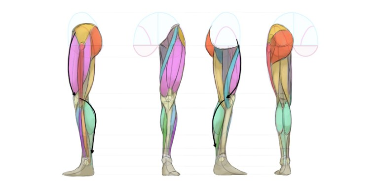 basic shape of legs