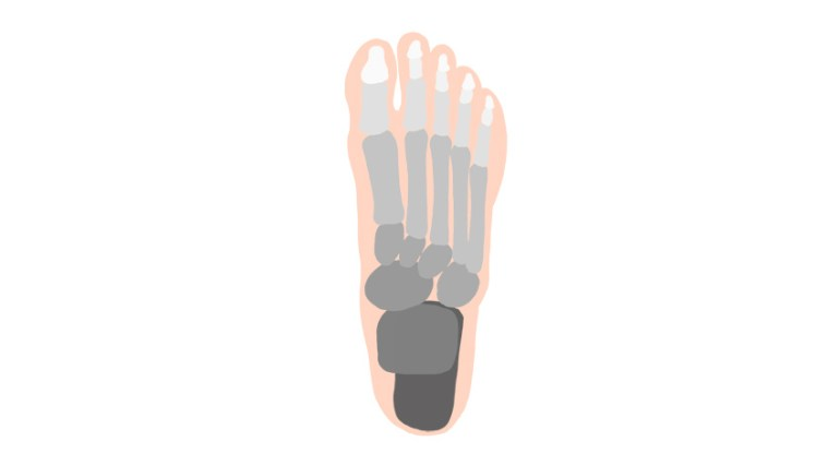 foot bones anatomy
