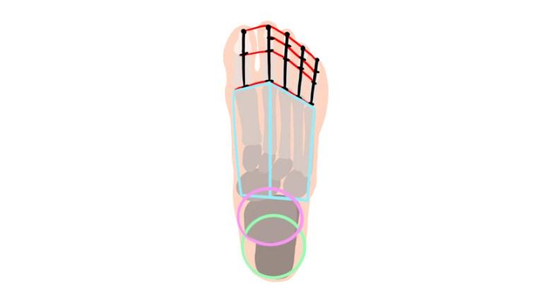 foot simplified