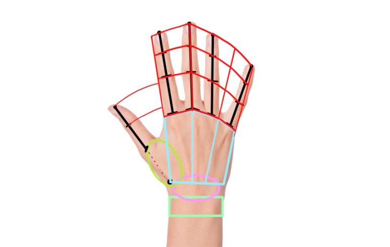 hand structure simplified
