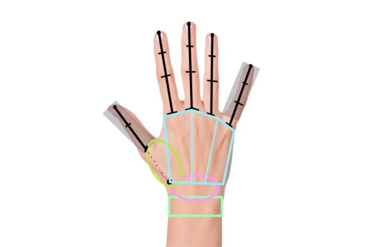 how long is thumb