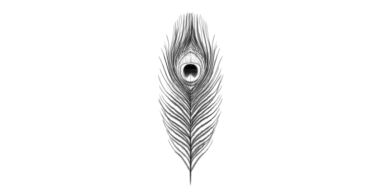 how to draw peacock feather