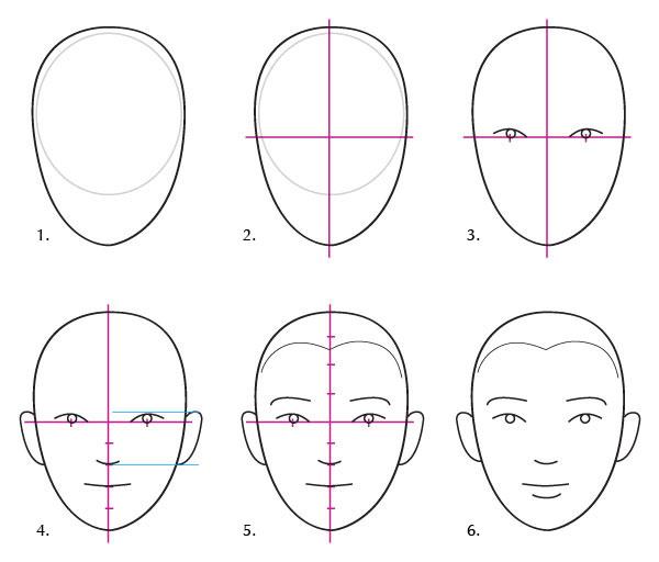 Human Anatomy Fundamentals: Basics of the Face