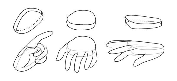 Human Anatomy Fundamentals: How to Draw Hands