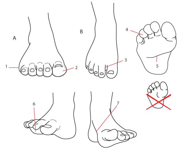 Human Anatomy Fundamentals: How to Draw Feet