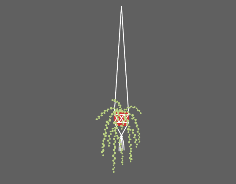 placing the house plant in the macrame