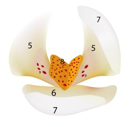 middle vanilla