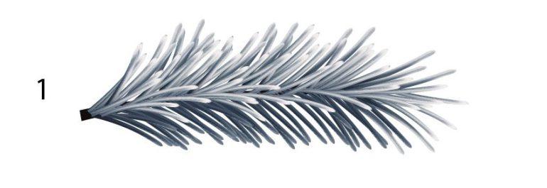 pine needle branch