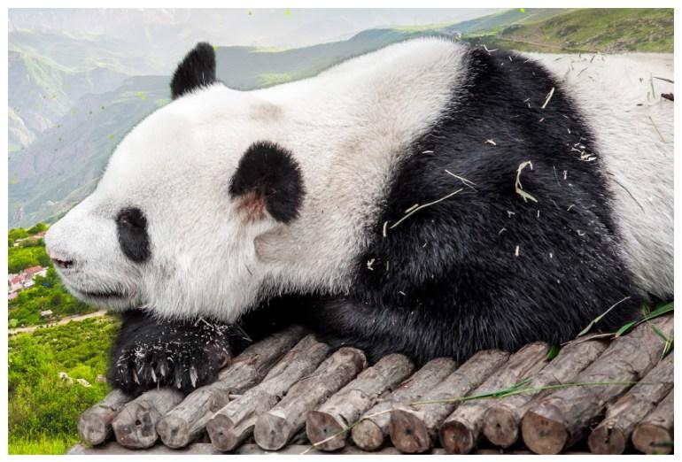 extract panda