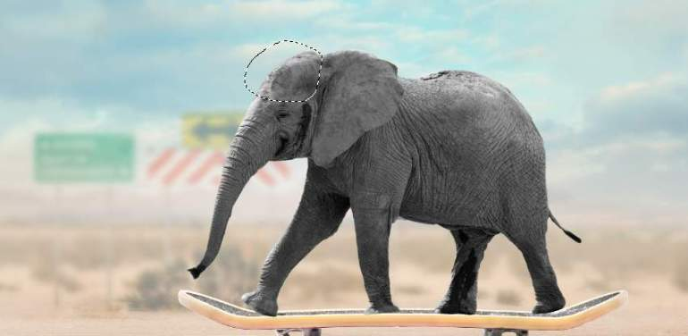 elephant puppet warp result