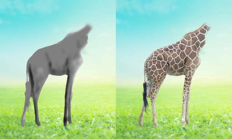 giraffe DB results