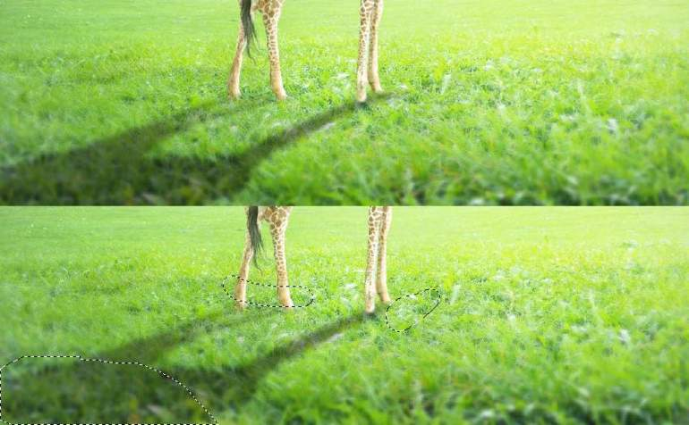 giraffe shadow masking