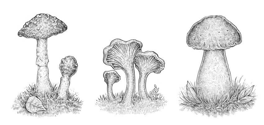 How to Draw a Mushroom