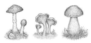 draw mushroom mushrooms drawing ink three tutorial different creating ll nature summer