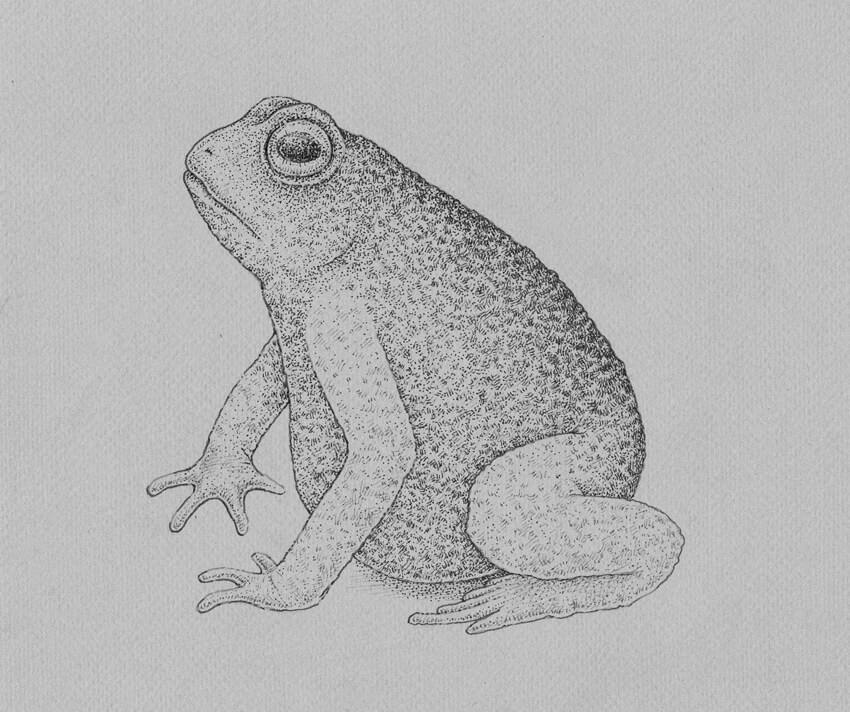 How to Draw a Frog Step by Step