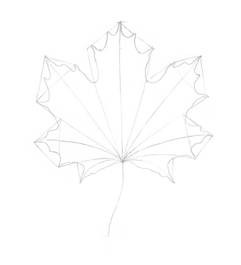 Completing the contours of the leaf