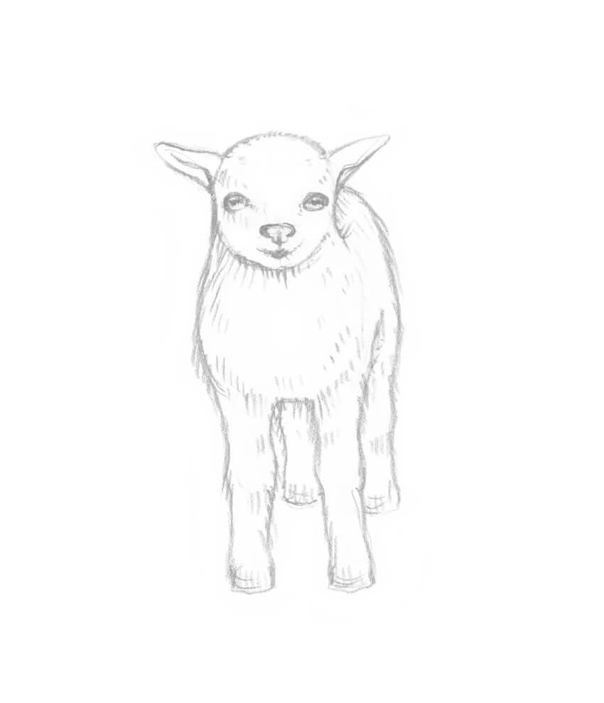 medium resolution of as a cute addition i draw a floral diadem on the head of the baby goat there is no need to draw all the tiny petals or other details