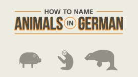 The German Animal Names Flowchart