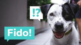 Die weltweit beliebtesten Haustiernamen