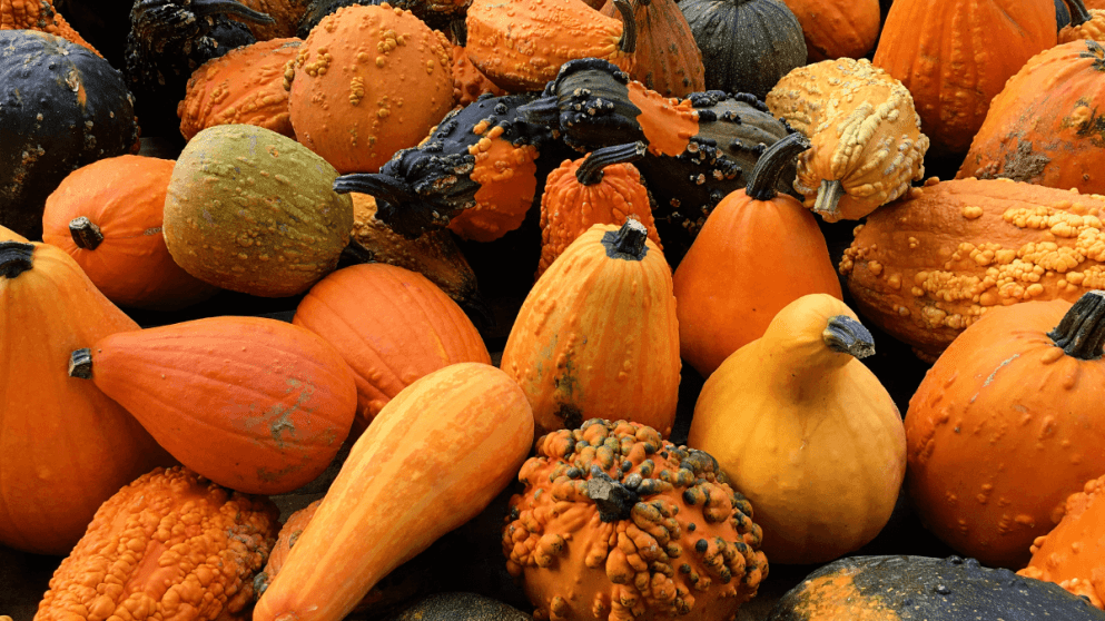 A Cultural History Of Pumpkins And Gourds