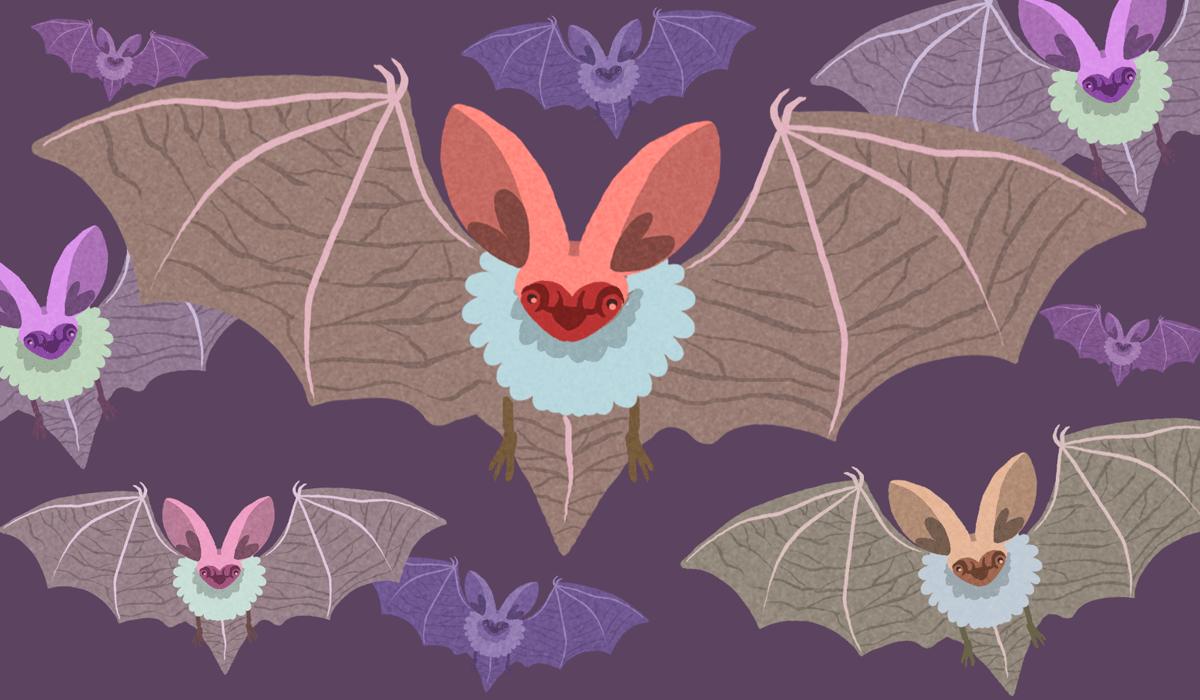Murciélagos en Panamá
