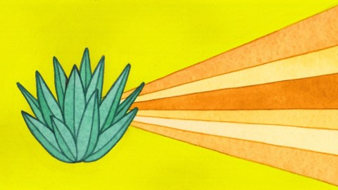 Mezcal vs. Tequila: Everything You Need To Know About These Mexican Spirits
