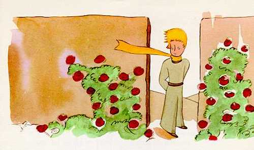 children's books le petit prince