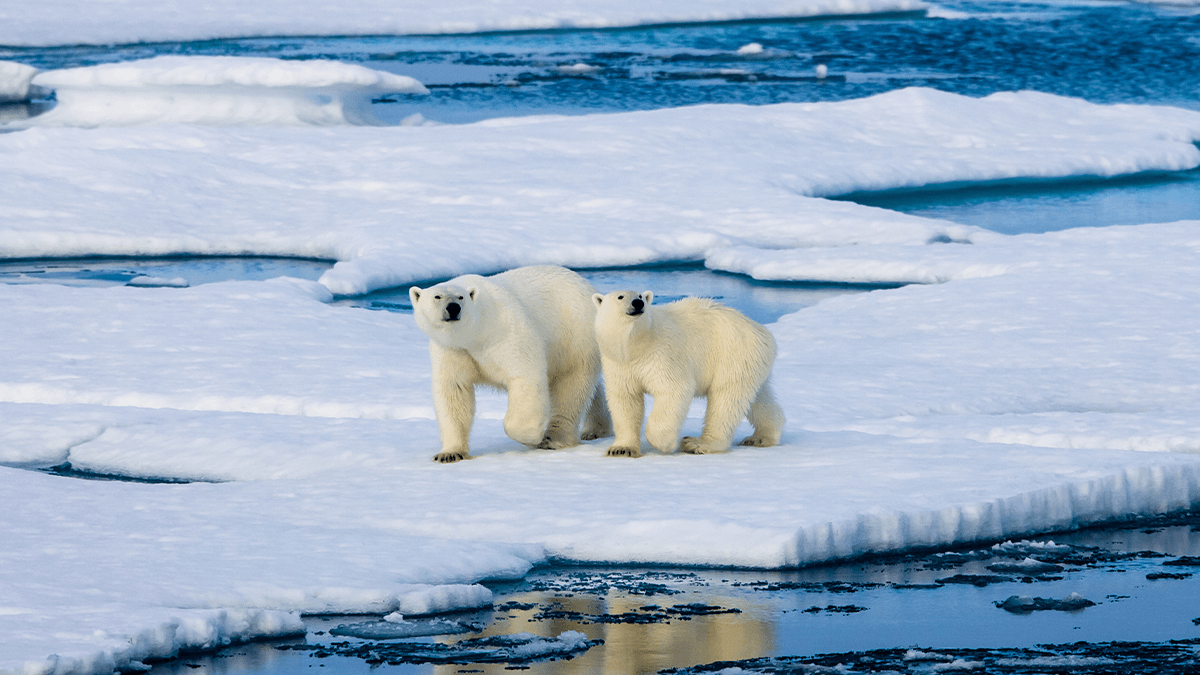 Is Climate Change Accelerating Language Loss?