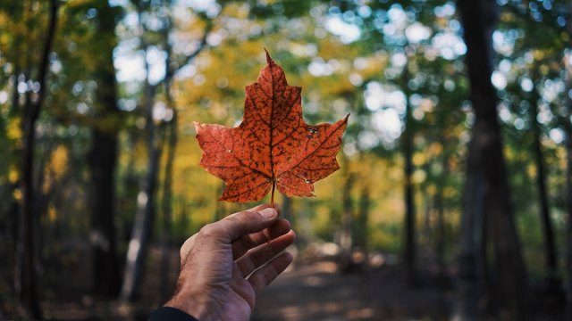 Do You Believe These 9 Myths About Canada?