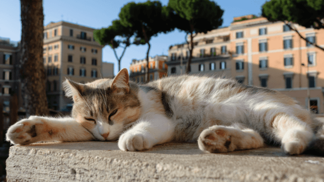How To Talk About Animals In Italian