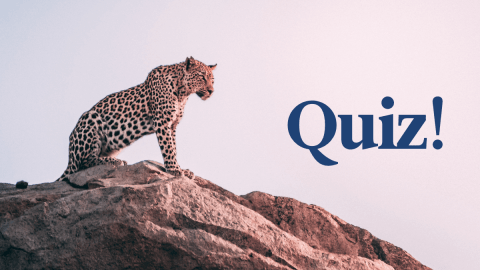 Quiz: How Well Do You Know Spanish Animal Names?