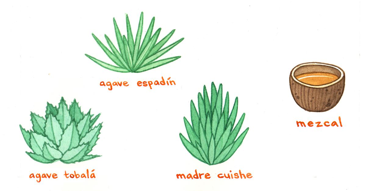 Die Pflanze