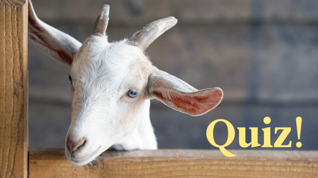 Quiz: How Well Do You Know French Animal Names?