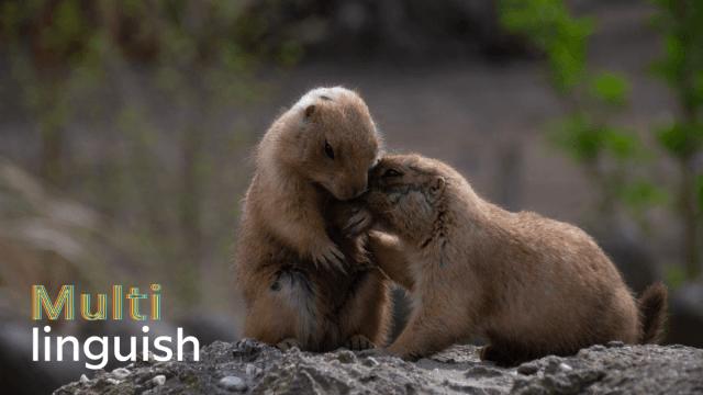 Multilinguish: Talking To Animals