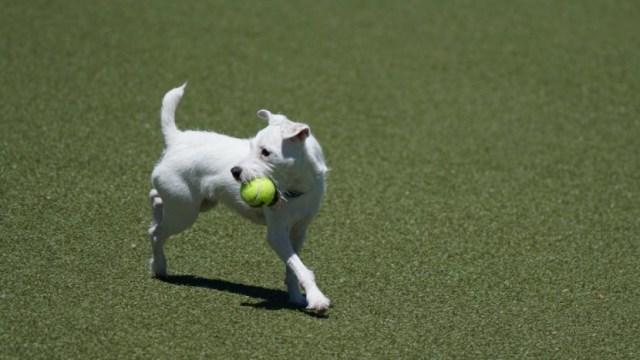 Le vocabulaire du tennis : glossaire de base pour les débutants