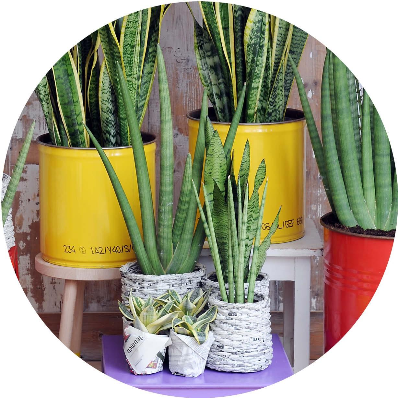 5 onverwoeste kamerplanten  Onvetwoest  Kamerplanten