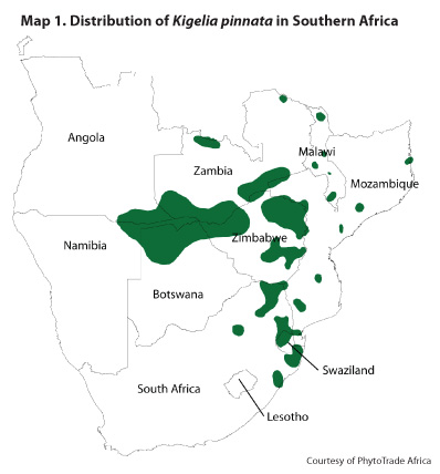 Kigelia Pinnata map
