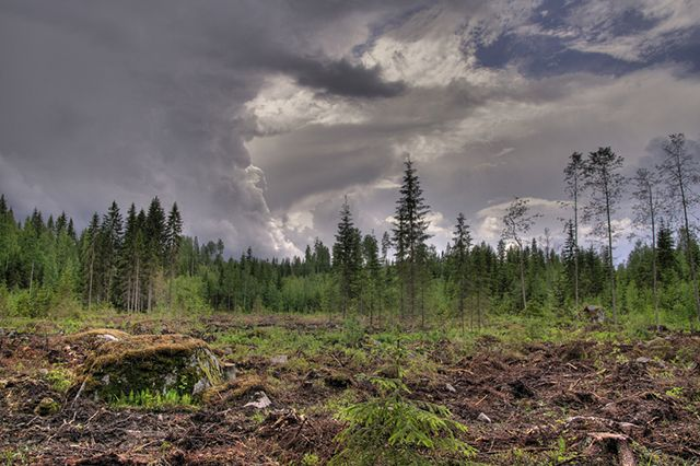 Clear cut forest in Finland