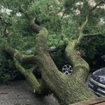 Man Killed By Falling Tree In Queens As Isaias Whips Through Nyc Gothamist