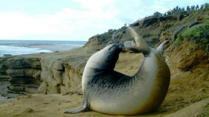 seals helped climate scientists