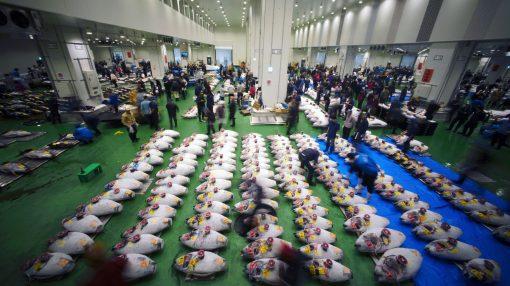 Resultado de imagem para toyosu fish market