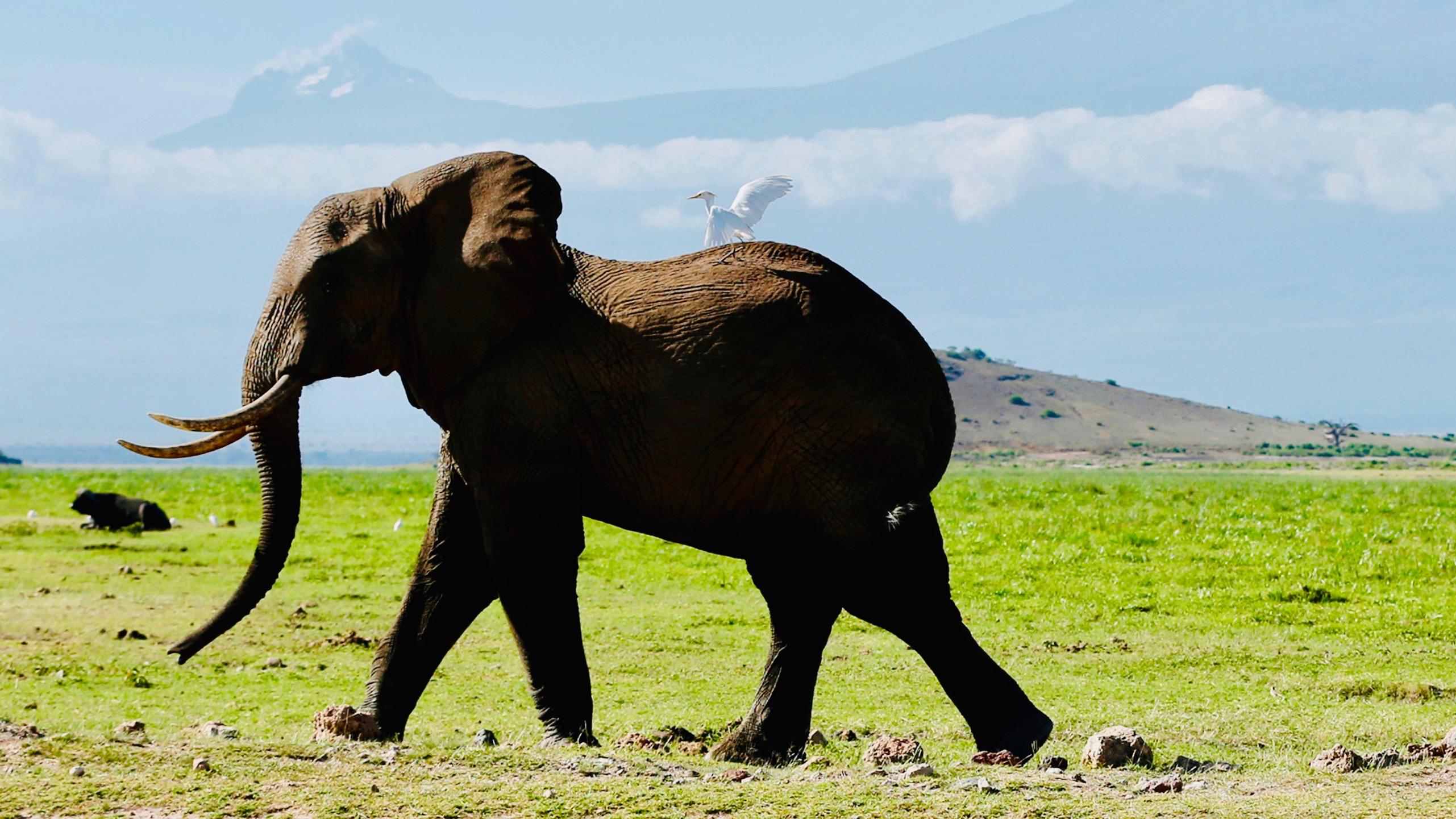 Celebrate World Elephant Day By Not Riding An Elephant Quartz