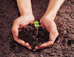 Hand holding a plant in soil