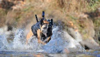 Navy-SEAL-mwd-sofrep