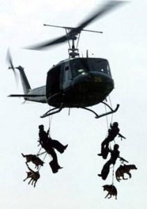 Air Assault Dogs