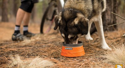 Best Dog Bowls for Camping