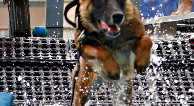Understanding Heat Injury in the K9 Athlete